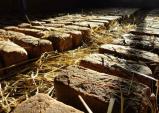백두대간 자락의 솔뫼유기농협동조합